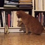 【動画】かわいそうだけど…かわいい!!メトロノームに毎秒ビビる猫